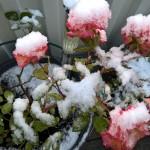 Die Rumba im Schnee