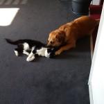 Tabby und Fili
