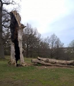 Der tote Baum im Eichenhain, Stuttgart