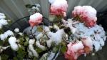 Rumba im Schnee